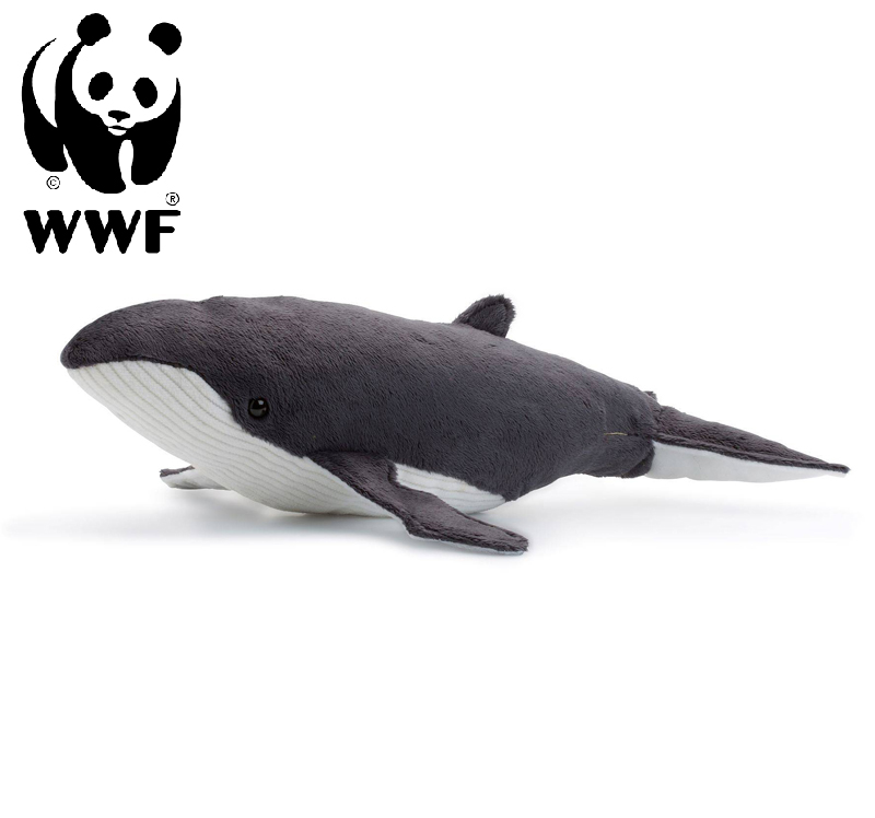Knölval - WWF