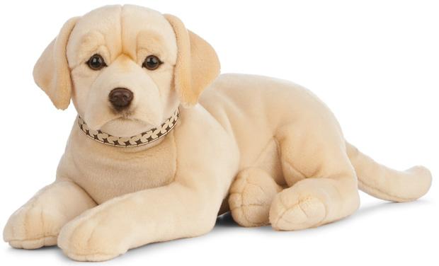 Labrador, gul
